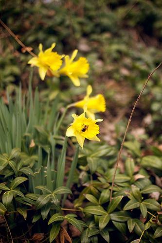 First flower 3