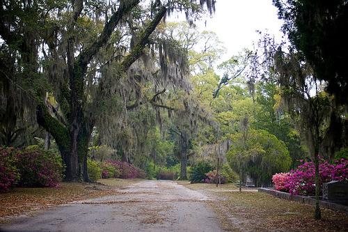 Savannah Monday 5