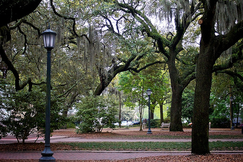 Savannah Monday 236