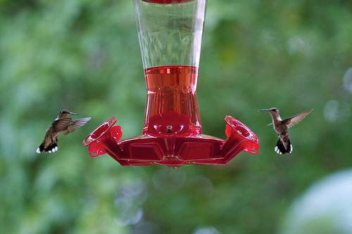 Hummingbird 83